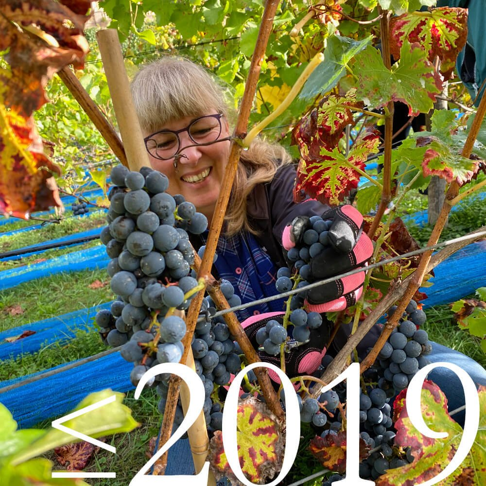 Der Weinanbau aufdem...